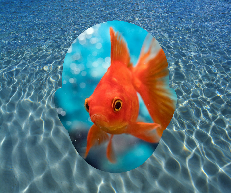 Seed Copywriting ott goldfish metaphor